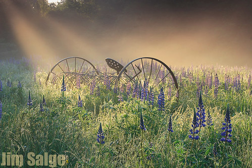morning light field newengland newhampshire nh franconia lupine crepuscularrays sugarhill godbeams lupinefestival sugarhilllupinefestival