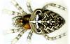 European Garden Spider, Araneus diadematus, Ernst Haeckel, http://commons.wikimedia.org/wiki/Kunstformen_der_Natur
