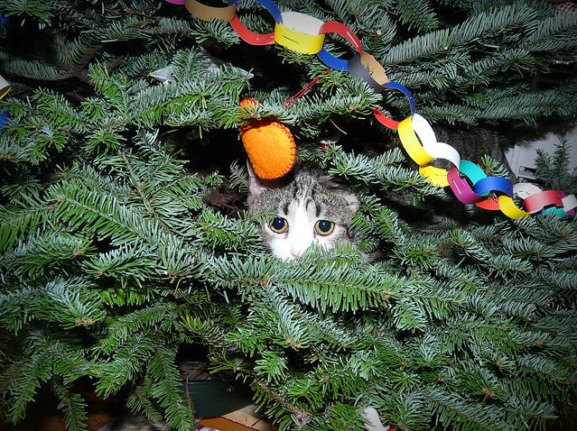 Christmas ninja cat