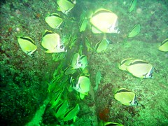 algae, coral reef fish, organism, marine biology, green, freshwater aquarium, underwater,