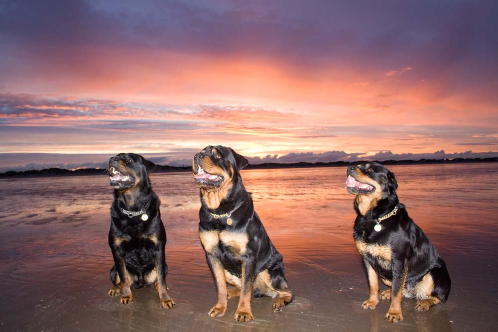 Julzez Rottweilers - St Andrews Beach Sunset,