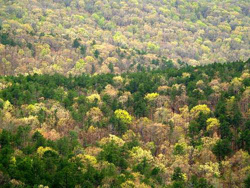 arkansas ouachitanationalforest flatsidewilderness flatsidepinnacle