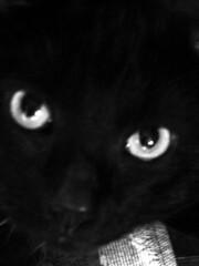 Cat Photo's