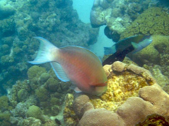 Snorkeling around Bangaram Island