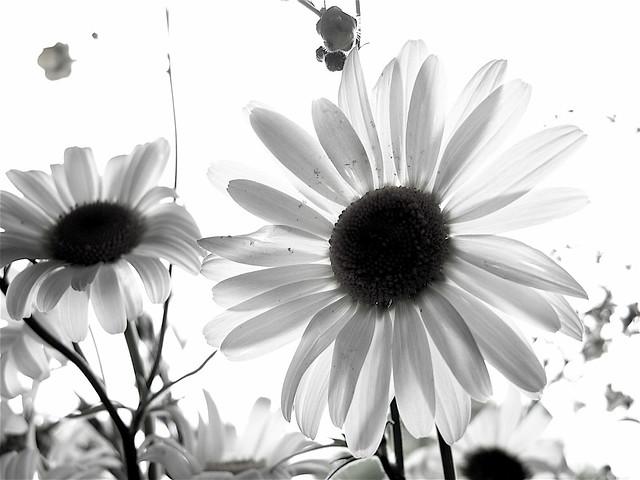 Photo - Clic clac noir et blanc ...