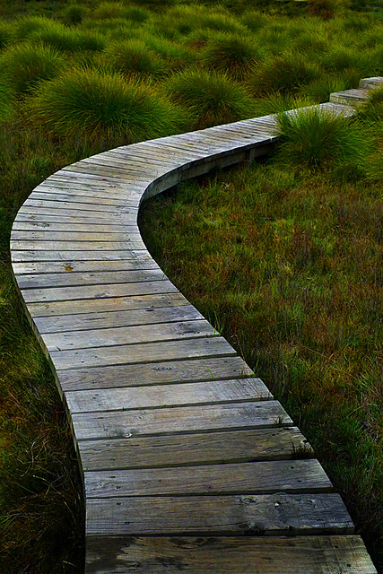pathways a gallery on flickr