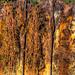Small photo of Mayport Rusted bulkhead