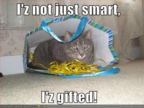 funny-pictures-smart-cat-gift-bag