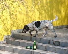 animal(1.0), dog(1.0), mammal(1.0), pointer(1.0),