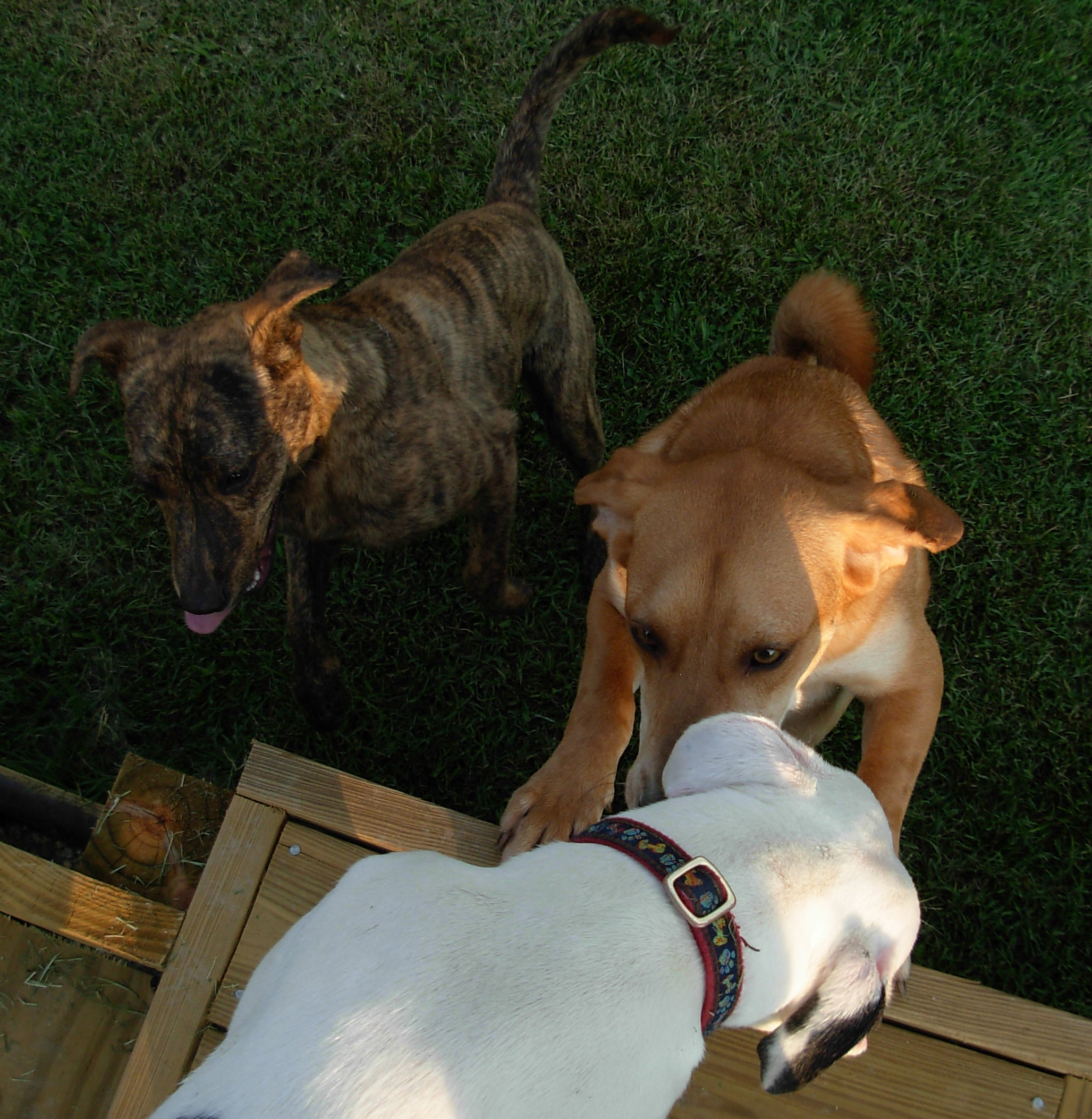 Petsmart Dog Kennel Medium Blue
