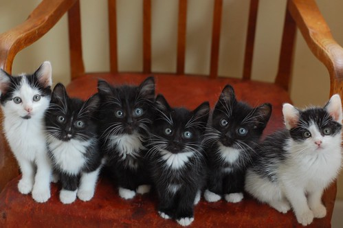 The Itty Bitty Kitty Committee Celebrating Two Thousand Posts!!