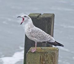Bird behaviour