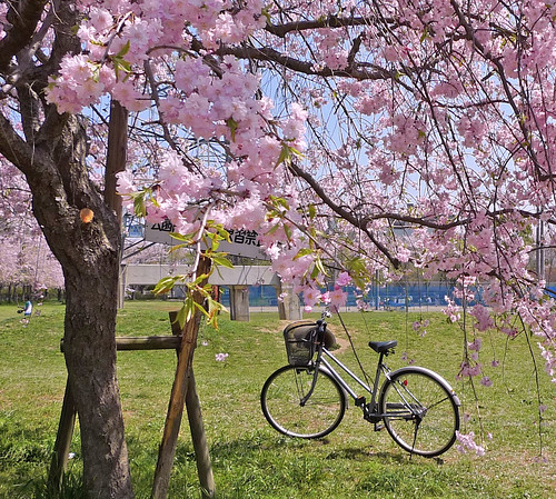 Picnic by bicycle