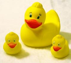the tiny duckies I am always threatening to drown.jpg