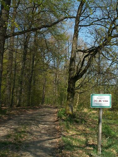 laue Luft im Wald von Graupa den Wandernden bemüht 155