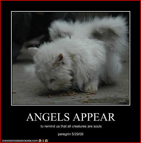 Angels Appear