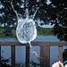 Water Balloon Fun! by vanderscheer