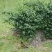Juvenile Robin by everaloft