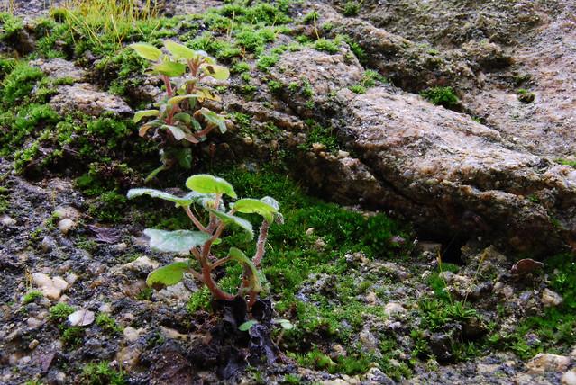Flickriver photoset 39 peque os jardines 39 by zyberchema - Jardines pequenos ...