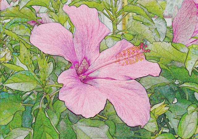 Pink Hibiscus, Pen Drawing | Flickr - Photo Sharing!