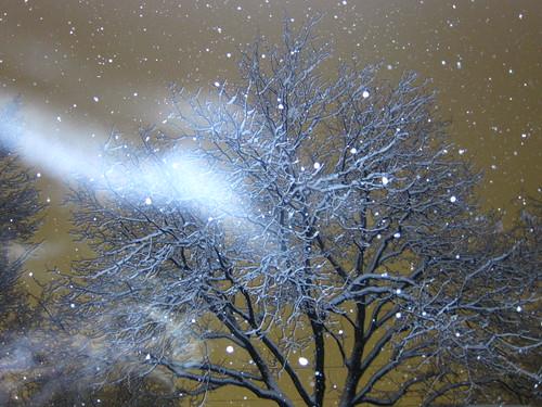 Breath of fresh snow