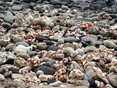 Rocky Coral beach