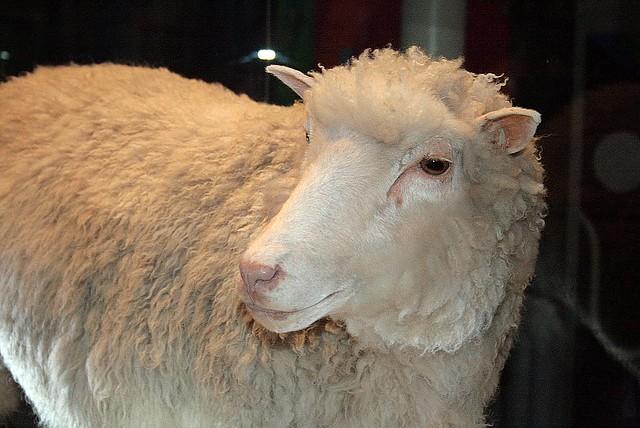 """""""羊のドリー""""から20年:ヒトクローン誕生で変わる未来への賛否 1番目の画像"""