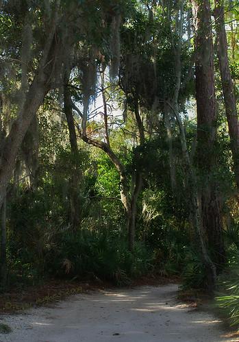 park trees path walk peggy tarponsprings andersonpark laketarpon ©allrightsreserved omot ©peggyhughes