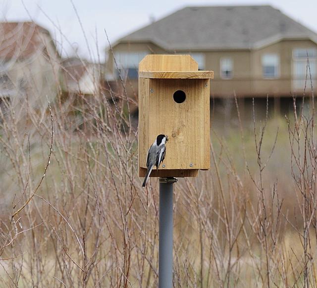 Chickadee nest box