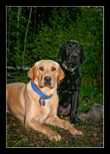 portrait dog mountains nature landscape colorado labrador retriever thechallengegame