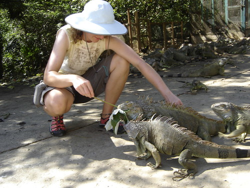 Roatan:  Iguana Farm near French Harbour