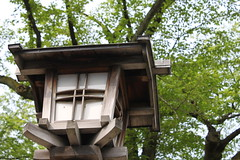 outdoor structure, tree house, lighting,