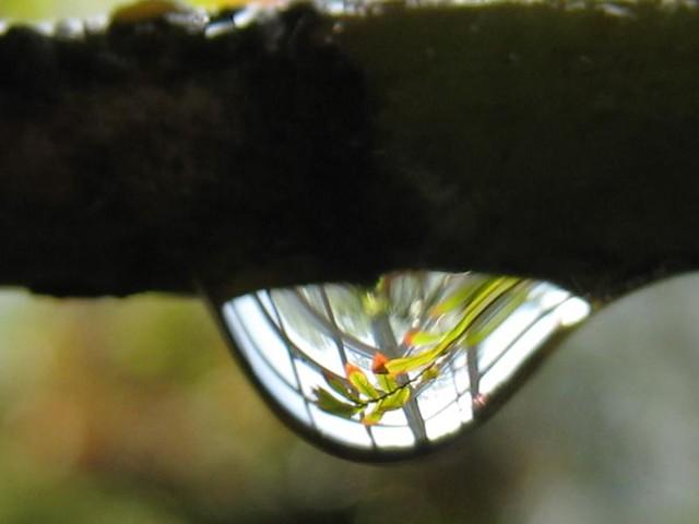 | صور رائعه على مقربه من قطرات المياه مناظر رائعه | 3575520647_3702b8ba49_z.jpg?zz=1