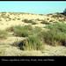 Dunes expedition by Gabri Mtnez