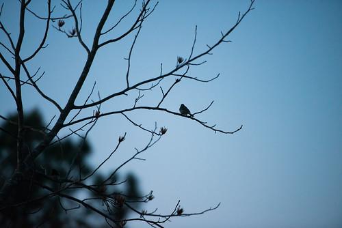 bird nature birds animal animals photography virginia backyard nikon d800 backyardbirds nikond800