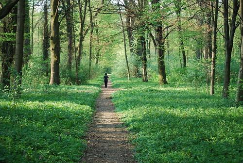 green forest mum körmend