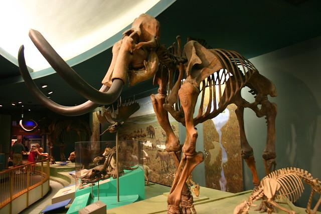 Imax At Museum Of Natural History Dc