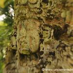 Ancient Face, Mayan Ruins - Copan Ruinas, Honduras