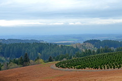 The Willamette Valley 1700 Feet Up