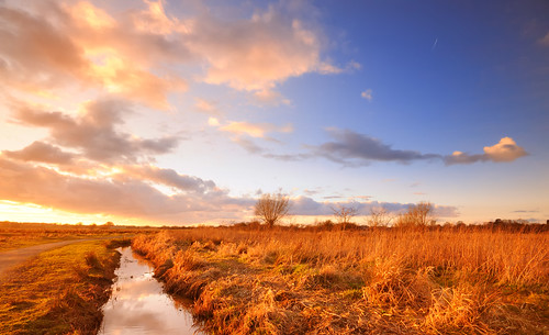 blue sunset sky cloud sun reed nature field grass dusk wideangle marshland nikond300