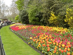A brilliant display of Spring colour in the park - it really is one of my favourite seasons