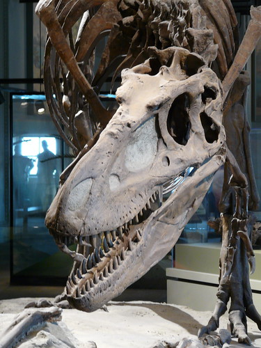 daspletosaurus - JungleKey.fr Image #200