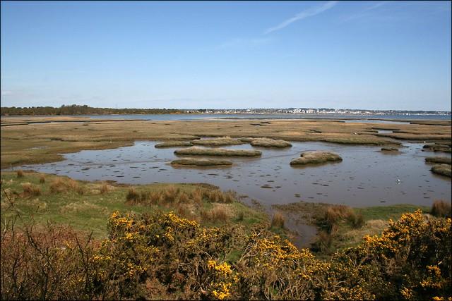 Salt marshes on Poole Harbour at Arne
