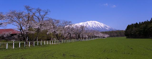 Photo:岩手山と桜並木 By:torugatoru