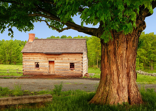 new york ny tree history church joseph religious site spring maple log cabin grove smith sugar sacred restored historical restoration mormon lds palmyra