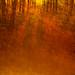 forest 1 by chrisfriel