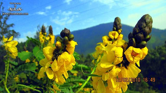 Beautiful flower from Munnar, Kerala