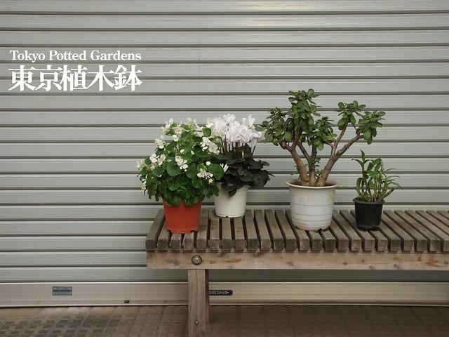 Tokyo Potted Gardens(Tokyo Plant Pots)東京植木鉢.