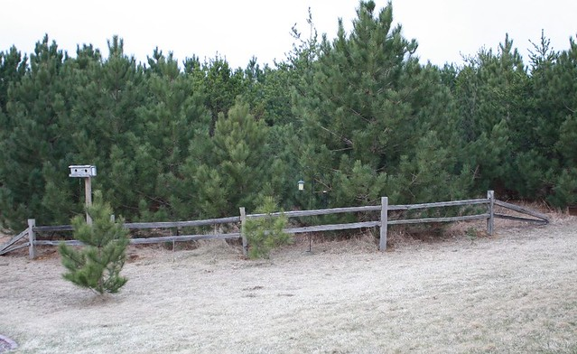 How to Build a Split Rail Fence | The Northwest's Source for