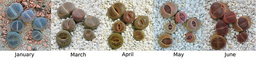 Lithops group Jan09 to June09